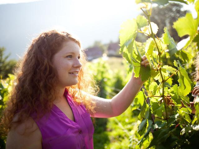 Vignes Chartreuse, Vin De Savoie