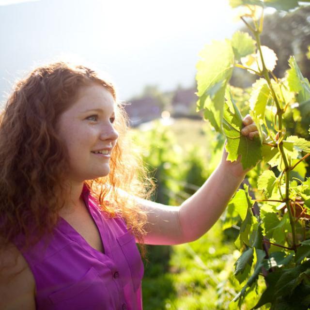 Vignes Chartreuse